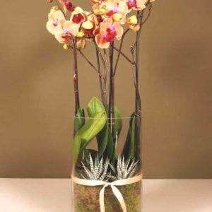 orchideeën kopen cadeau